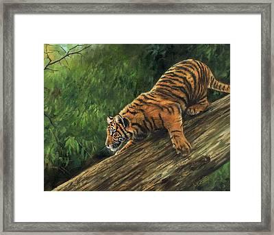 Tiger Descending Tree Framed Print by David Stribbling