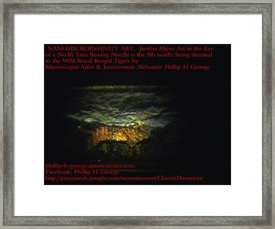 Tiger Donation Tiger Cubs Father  Framed Print by Phillip H George