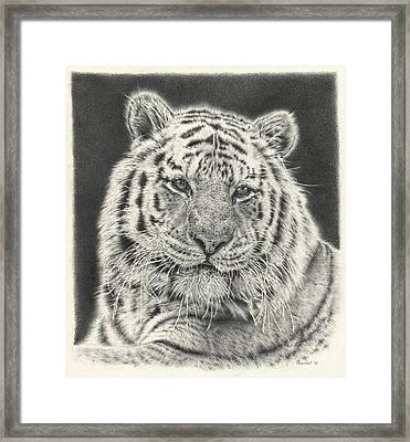 Tiger Drawing Framed Print