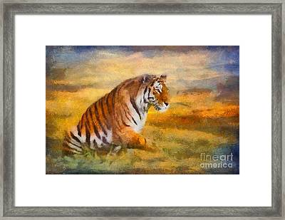 Tiger Dreams Framed Print
