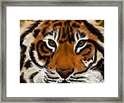 Tiger Eyes Framed Print