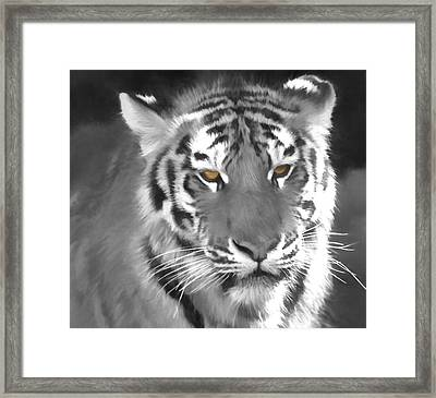 Tiger Eyes Framed Print by Dan Sproul