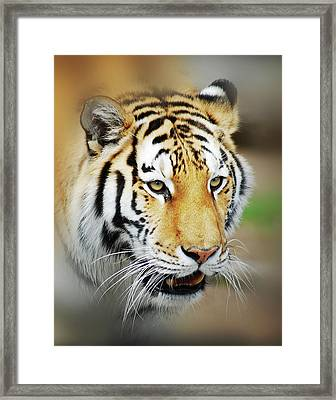 Framed Print featuring the photograph Tiger Eyes by Michael Peychich