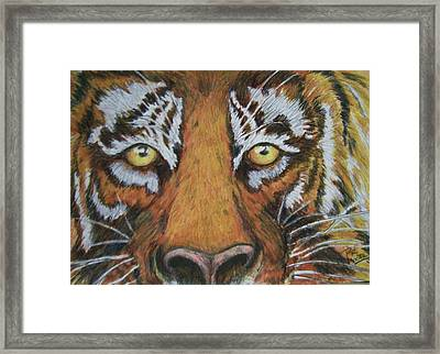 Tiger Eyes Framed Print by Patricia R Moore