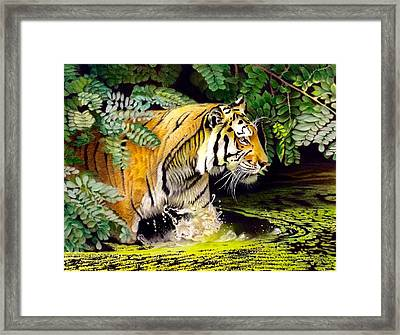 Tiger In The Sunderban Delta Framed Print