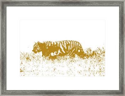 Tiger Framed Print by Joe Hamilton