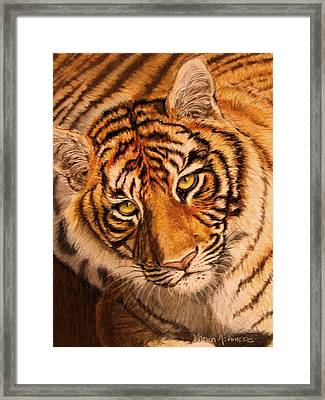 Framed Print featuring the drawing Tiger by Karen Ilari