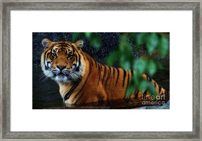 Tiger Land Framed Print