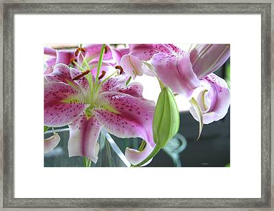 Tiger Lilies Framed Print