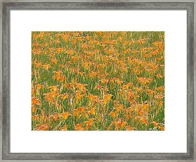 Tiger Lillies Framed Print by Luciana Seymour