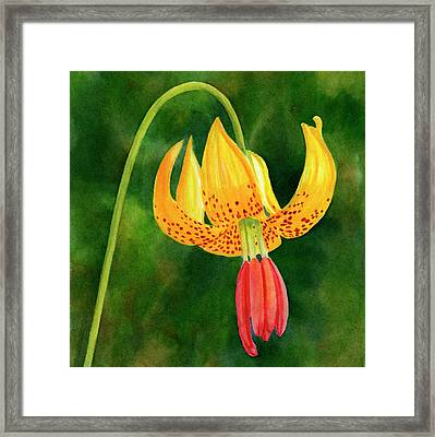 Tiger Lily Blossom With Background Framed Print