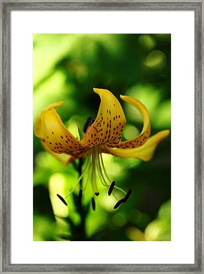 Tiger Lily Framed Print by Debbie Oppermann
