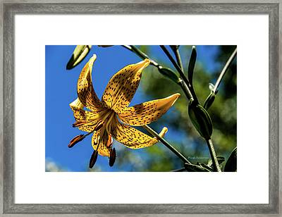 Tiger Lily Loud And Proud Framed Print