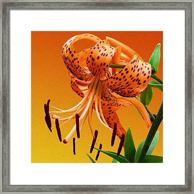Tiger Lily Framed Print by Mike McGlothlen