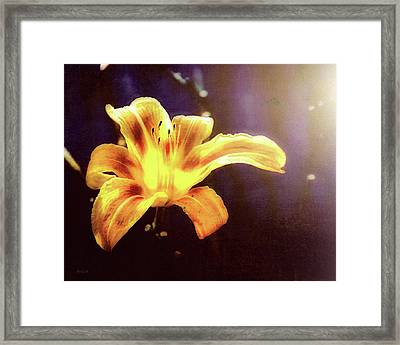 Tiger Lily On Waters Edge Framed Print