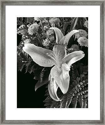 Tiger Lily Orchid  2 Framed Print by David Thompson