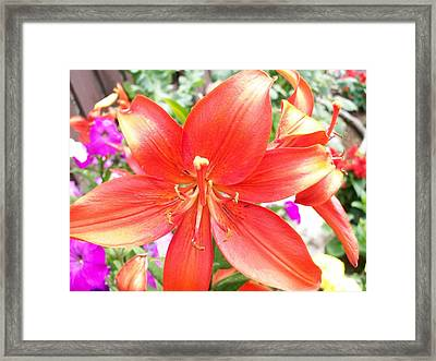 Framed Print featuring the photograph Tiger Lily by Sharon Duguay