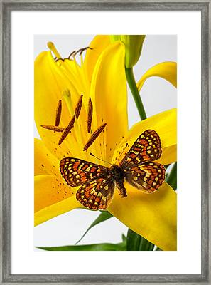 Tiger Lily With Butterfly Framed Print by Garry Gay