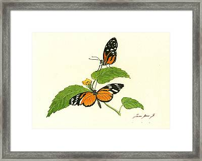 Tiger Longwing Heliconian Framed Print by Juan Bosco