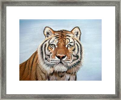 Tiger Framed Print by Mary Mayes