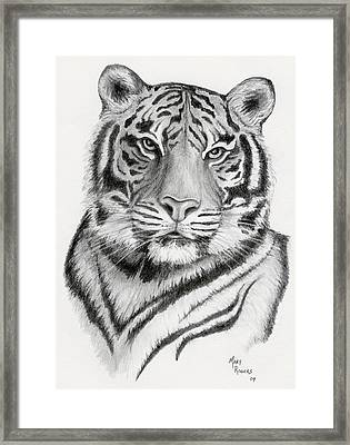 Tiger Framed Print by Mary Rogers