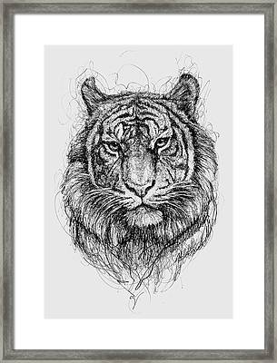 Tiger Framed Print by Michael Volpicelli