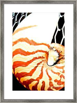 Tiger Nautilus Framed Print