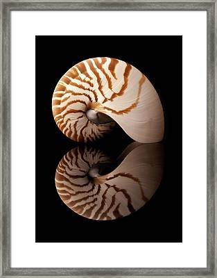 Tiger Nautilus Shell And Reflection Framed Print by Jim Hughes