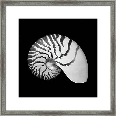 Framed Print featuring the photograph Tiger Nautilus Shell by Jim Hughes
