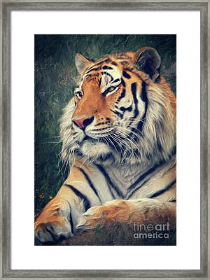 Tiger No 3 Framed Print by Angela Doelling AD DESIGN Photo and PhotoArt