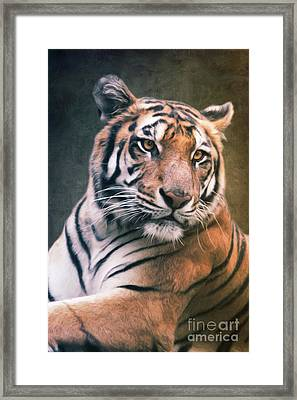 Tiger No 6 Framed Print by Angela Doelling AD DESIGN Photo and PhotoArt
