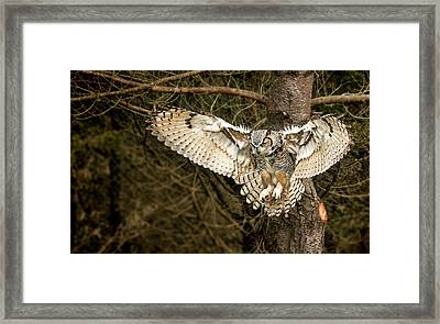 Tiger Of The Air Framed Print by Pat Eisenberger
