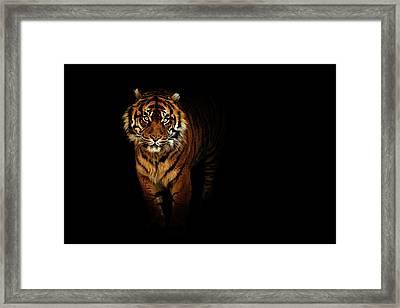 Tiger On A Black Background Framed Print