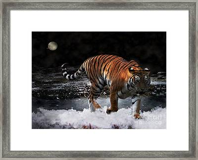 Framed Print featuring the photograph Tiger On The Run by Jacqi Elmslie