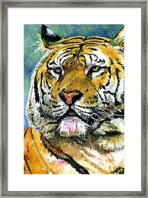 Tiger Portrait Framed Print by John D Benson