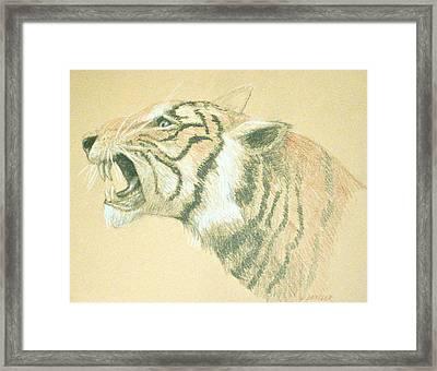 Tiger Roaring Framed Print by Deborah Dendler