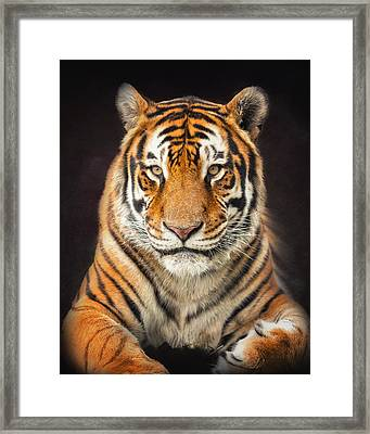 Tiger Framed Print by Ron  McGinnis