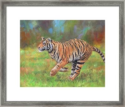 Tiger Running Framed Print by David Stribbling