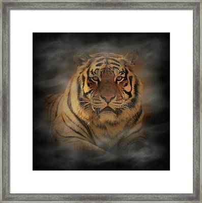 Tiger Framed Print by Sandy Keeton