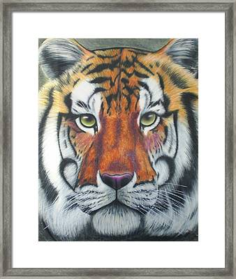 Tiger Framed Print by Scarlett Royal