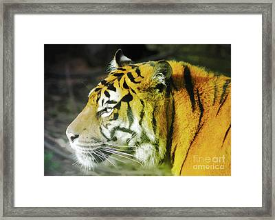 Tiger Framed Print by Srikanth Tirunagari