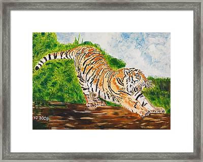 Tiger Stretching Framed Print by Valerie Ornstein