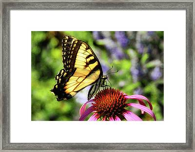 Framed Print featuring the photograph Tiger Swallowtail by Elaine Manley