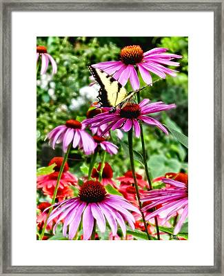Tiger Swallowtail On Coneflower Framed Print by Susan Savad