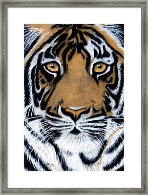 Tiger Tiger Burning Bright Framed Print by Jan Amiss