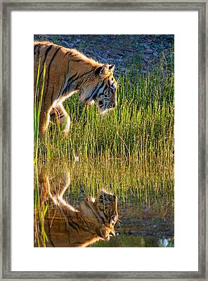 Tiger Tiger Burning Bright Framed Print by Melody Watson