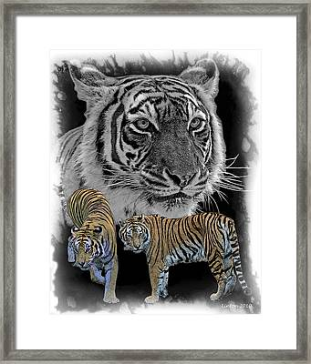 Tiger Tribute Framed Print by Larry Linton