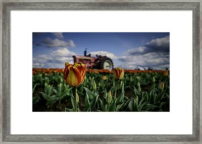 Framed Print featuring the photograph Tiger Tulip by Ryan Smith