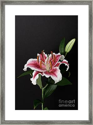 Tiger Woods Lily Framed Print