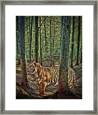 Tiger Woods Framed Print by Sharon Lisa Clarke